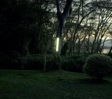 Johann Ryno de Wet _ Garden Tree Light_camara oscura